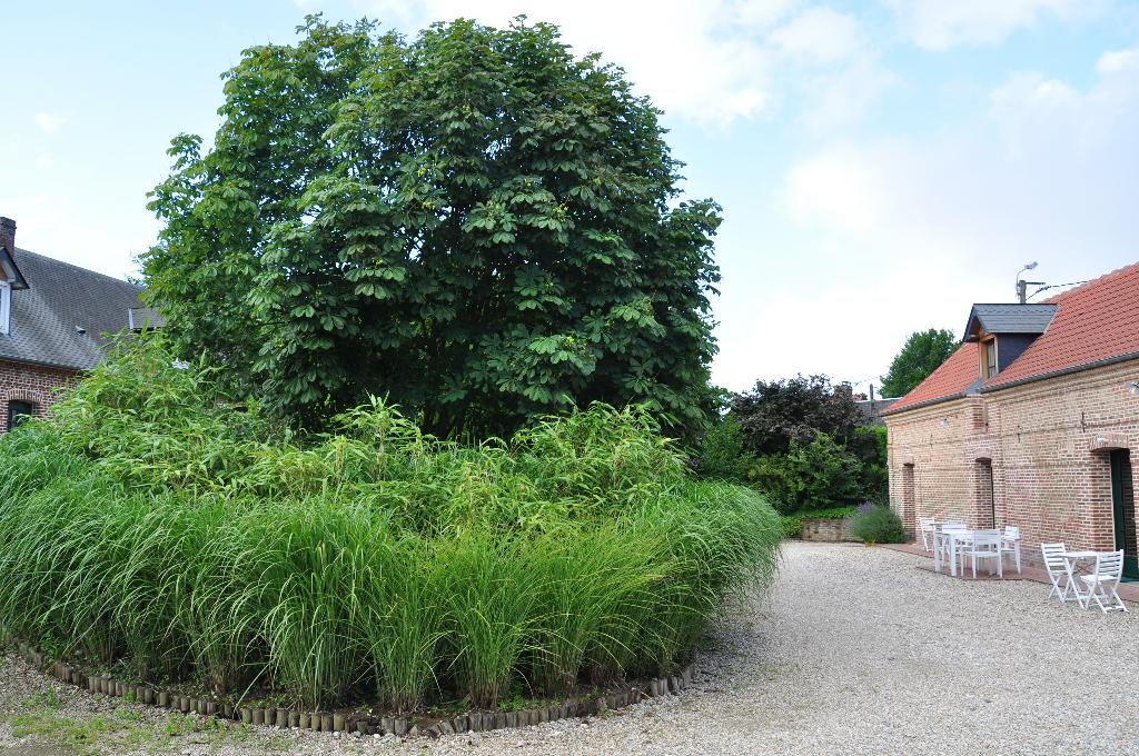 au centre : les myscanthus